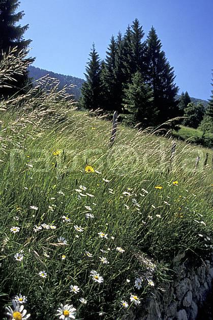 aa2452-24LE : Vallée de la Valserine, Monts Jura, Ain, Alpes.  Europe, CEE, champ, fleur, C02, C01 arbre, flore, moyenne montagne, paysage (France).