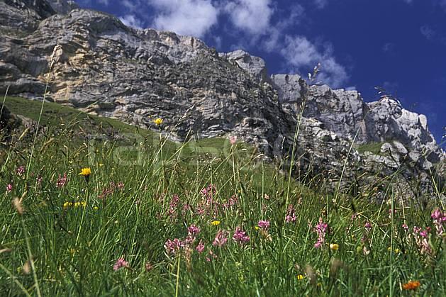 aa2472-13LE : Les Diablerets, Alpes Vaudoises, Alpes.  Europe, ciel bleu, fleur, herbe, falaise, C02, C01 moyenne montagne, paysage (Suisse).