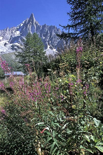 aa2542-30LE : Aiguille des Drus, Massif du Mont-Blanc, Chamonix, Haute-Savoie, Alpes.  Europe, CEE, fleur, ciel bleu, C02, C01 moyenne montagne, paysage, Annecy 2018 (France).