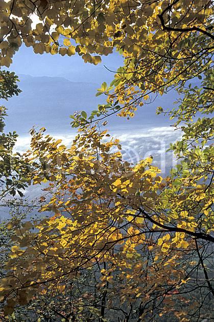 aa2564-21LE : Plateau du Touvet, Isère, Alpes.  Europe, CEE, branche, feuille, C02, C01 arbre, moyenne montagne, paysage (France).