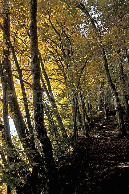 aa2564-22LE : Plateau du Touvet, Isère, Alpes.  Europe, CEE, sentier, sentier, branche, feuille, C02, C01, sous bois arbre, forêt, moyenne montagne, paysage (France).