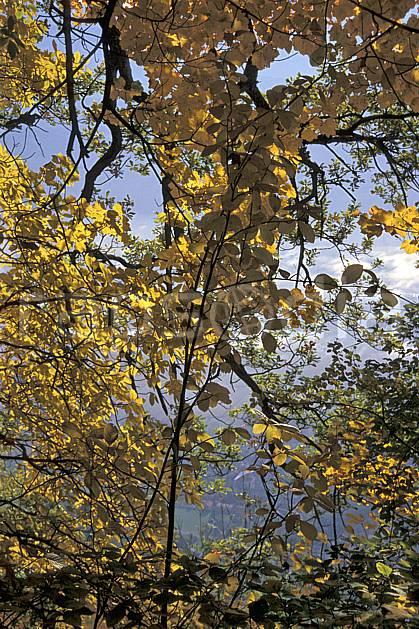 aa2564-23LE : Plateau du Touvet, Isère, Alpes.  Europe, CEE, branche, feuille, C02, C01 arbre, forêt, gros plan, moyenne montagne, paysage (France).