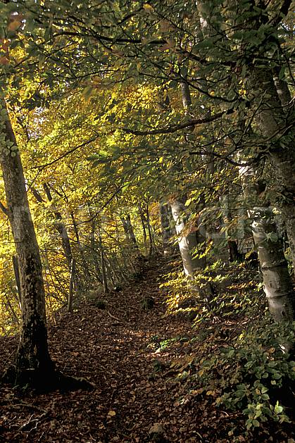 aa2564-25LE : Plateau du Touvet, Isère, Alpes.  Europe, CEE, branche, feuille, sentier, sous bois, C02, C01, sous bois arbre, forêt, moyenne montagne, paysage (France).