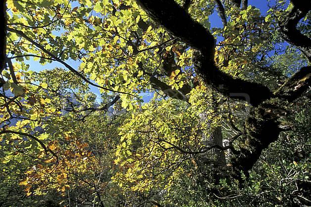 aa2572-15LE : Gorges du Verdon, Sentier Martel, Var.  Europe, CEE, branche, feuille, C02, C01 arbre, gros plan, moyenne montagne, paysage (France).