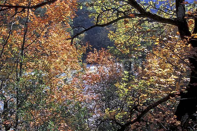 aa2572-24LE : Gorges du Verdon, Sentier Martel, Var.  Europe, CEE, branche, feuille, C02, C01 arbre, forêt, gros plan, moyenne montagne, paysage (France).