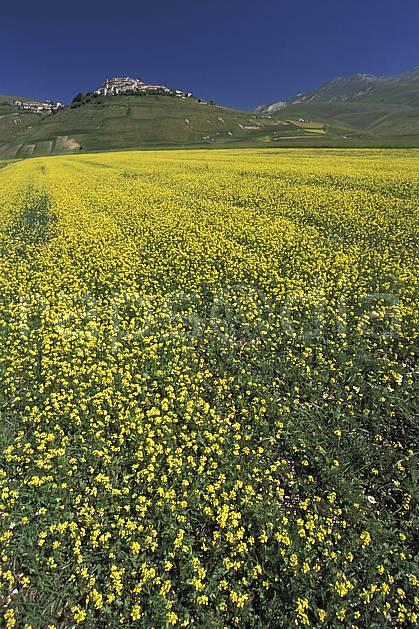 aa2696-17LE : Castellucio di Norcia.  Europe, CEE, champ, ciel bleu, fleur, C02, C01 moyenne montagne, paysage (Italie).