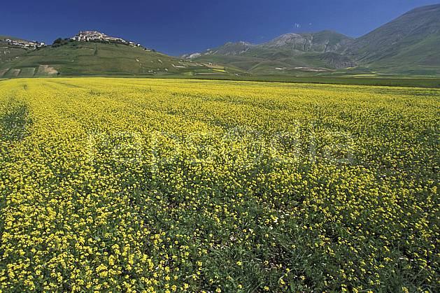 aa2696-18LE : Castellucio di Norcia.  Europe, CEE, champ, ciel bleu, fleur, C02, C01 moyenne montagne, paysage (Italie).