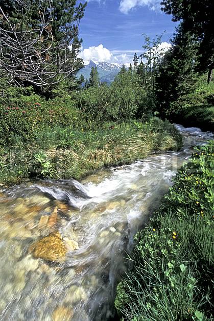 aa2747-10LE : Les Arcs, Savoie, Alpes.  Europe, CEE, ciel voilé, C02, C01 arbre, forêt, gros plan, moyenne montagne, paysage, rivière (France).