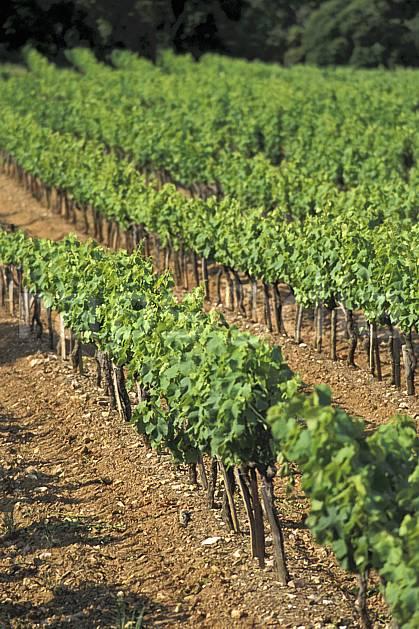 aa2900-22LE : Vignes du massif des Maures, Var.  Europe, CEE, vigne, champ, raisin, C02, C01 moyenne montagne, paysage (France).