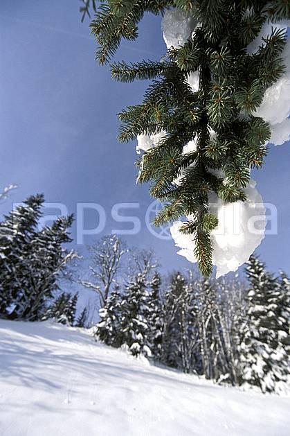 aa2904-21LE : Les Contamines Montjoie, Haute-Savoie, Alpes.  Europe, CEE, ciel bleu, poudreuse, sapin, branche, C02, C01 arbre, forêt, gros plan, moyenne montagne, paysage, Annecy 2018 (France).