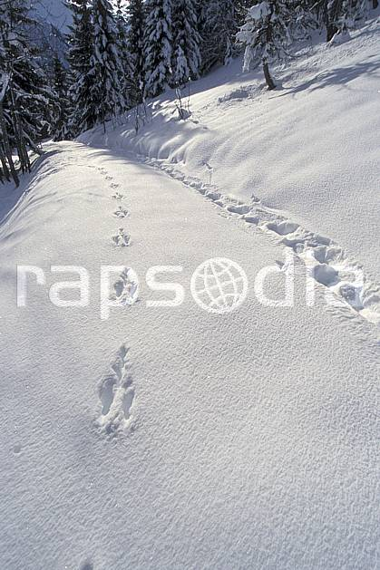 aa2904-24LE : Les Contamines Montjoie, Haute-Savoie, Alpes.  Europe, CEE, poudreuse, sapin, trace, C02, C01 moyenne montagne, paysage, Annecy 2018 (France).