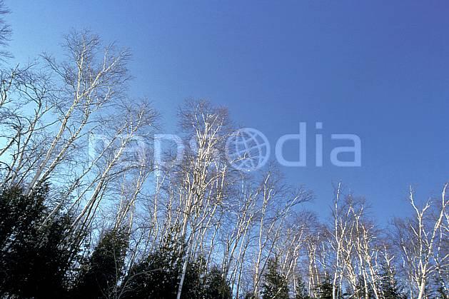 aa3099-06LE : Forêt Québécoise.  Amérique du nord, Amérique, C02, C01 arbre, forêt, moyenne montagne, paysage, voyage aventure (Canada Québec).