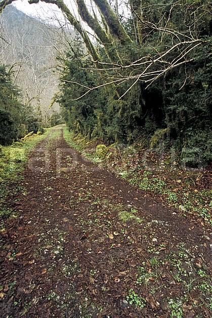 aa3129-19LE : La Gourgue d'Asque, Pyrénées, Alpes.  Europe, EEC, footpath, road, leaf, moss, under wood environment, middle mountain, landscape, transportation (France).