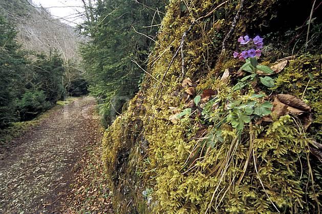 aa3129-20LE : La Gourgue d'Asque, Pyrénées, Alpes.  Europe, EEC, footpath, road, leaf, moss, under wood, flower, violet environment, flora, forest, middle mountain, landscape, transportation (France).