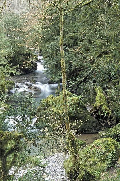 aa3129-25LE : La Gourgue d'Asque, Pyrénées, Alpes.  Europe, CEE, mousse, sous bois, C02, C01 arbre, forêt, moyenne montagne, paysage, rivière (France).