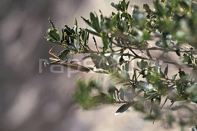 ac0344-20LE : Mante religieuse.  Europe, CEE, Mante religieuse, insecte, branche, C02, C01 arbre, faune, gros plan (France).