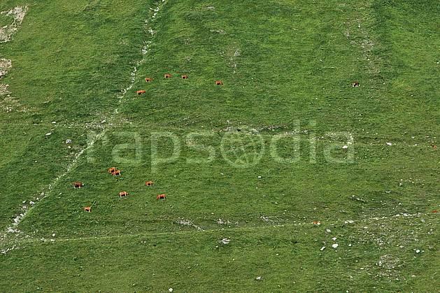 ac041249LE : Alpage, Alpes.  Europe, CEE, vache, alpage, vue aérienne, C02, C01 faune, moyenne montagne, paysage (France).