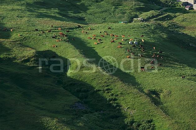 ac041251LE : Alpage, Alpes.  Europe, CEE, vache, alpage, troupeau, vue aérienne, C02, C01 faune, moyenne montagne, paysage (France).