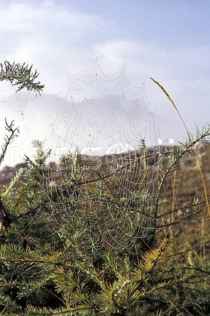 ac0473-08LE : Toile d'araignée.  Europe, CEE, toile d'araignée, rosée, C02, C01 faune (France).