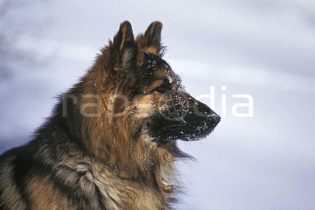 ac0537-08LE : Chien.  Europe, CEE, chien, poudreuse, C02, C01  (France).