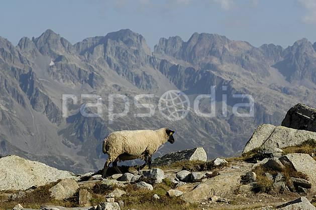 ac055573LE : Plan de l'Aiguille, les Aiguilles Rouges en arrière-plan, Haute-Savoie, Alpes.  Europe, CEE, mouton, chaine de montagnes, C02, C01 faune, moyenne montagne, paysage, Annecy 2018 (France).