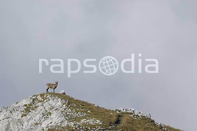 ac055756LE : Bouquetin, Videmanette, Alpes.  Europe, sommet, bouquetin, C02, C01 faune, moyenne montagne, nuage, paysage (Suisse).