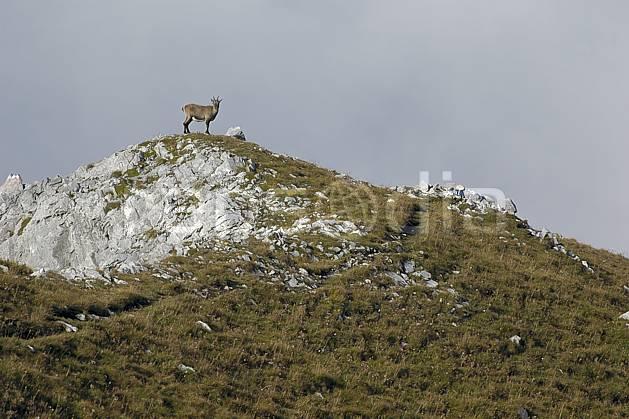 ac055758LE : Bouquetin, Videmanette, Alpes.  Europe, sommet, bouquetin, C02, C01 faune, moyenne montagne, nuage, paysage (Suisse).