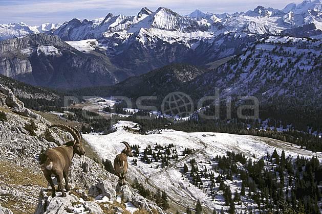 ac1071-19LE : Bouquetins, Sous Dine, Haute-Savoie, Alpes.  Europe, CEE, bouquetin, ciel voilé, vallée, panorama, C02, C01 faune, moyenne montagne, paysage, Annecy 2018 (France).
