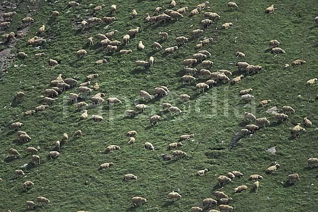 ac1300-14LE : Les 2 Alpes, Isère, Alpes.  Europe, CEE, herbe, mouton, vue aérienne, troupeau, C02, C01 faune, groupe, moyenne montagne (France).