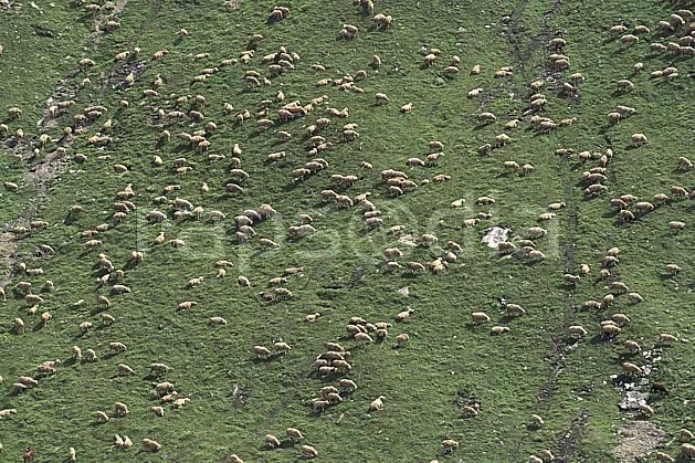 ac1300-15LE : Les 2 Alpes, Isère, Alpes.  Europe, CEE, herbe, mouton, vue aérienne, troupeau, C02, C01 faune, groupe, moyenne montagne (France).