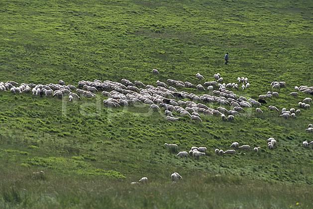 ac2693-05LE : Castellucio di Norcia.  Europe, CEE, herbe, mouton, troupeau, berger, C02, C01 faune, groupe, moyenne montagne (Italie).