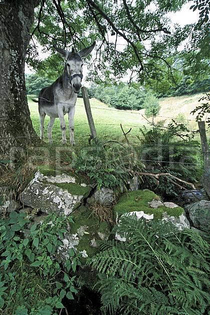 ac2893-33LE : Ane, Savoie.  Europe, CEE, âne, C02, C01 faune, moyenne montagne (France).