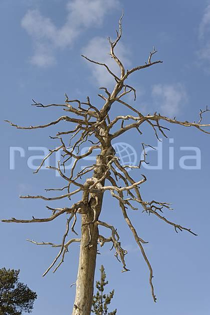 ad061277LE : Arbre sec.  Europe, CEE, branche, ciel bleu, C02, C01 arbre, flore, voyage aventure (Finlande).