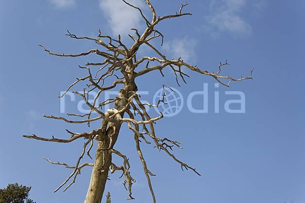 ad061278LE : Arbre sec.  Europe, CEE, branche, ciel bleu, C02, C01 arbre, flore, voyage aventure (Finlande).