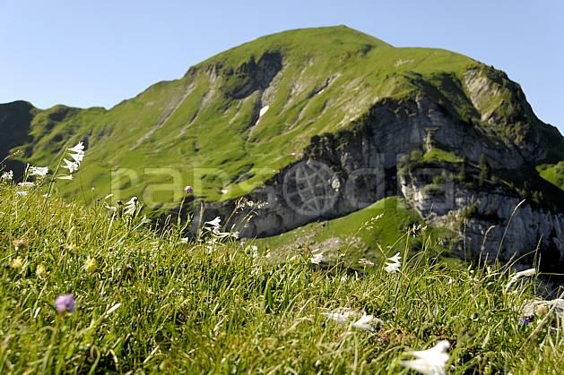 ad062522LE : Massif de la Tournette, Lis de Saint Bruno, Haute-Savoie, Alpes.  Europe, CEE, fleur, C02, C01 Annecy 2018, flore, gros plan, moyenne montagne, paysage (France).