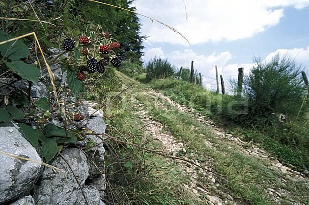 ad2893-16LE : Mûres, Savoie, Alpes.  Europe, CEE, fruit, sentier, C02, C01 Annecy 2018, flore, gros plan, moyenne montagne (France).