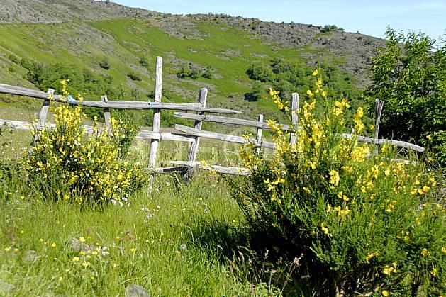 ae062449LE : Vieille barrière, Massif des Cévennes, Gard. randonnée pédestre Europe, CEE, sport, rando, loisir, action, sport de montagne, genêt, fleur, C02, C01 environnement, moyenne montagne (France).