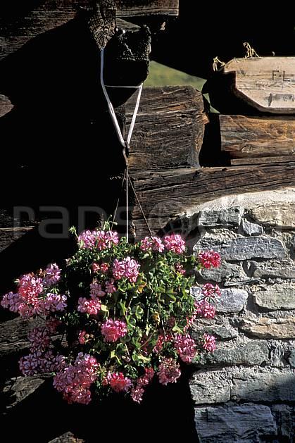 ae2532-22LE : Hameau de Zmutt près de Zermatt, Haute Route Chamonix / Zermatt, Alpes.  Europe, cabane, fleur, fleur rose, C02, C01 environnement, flore, gros plan, habitation, moyenne montagne, patrimoine (Suisse).