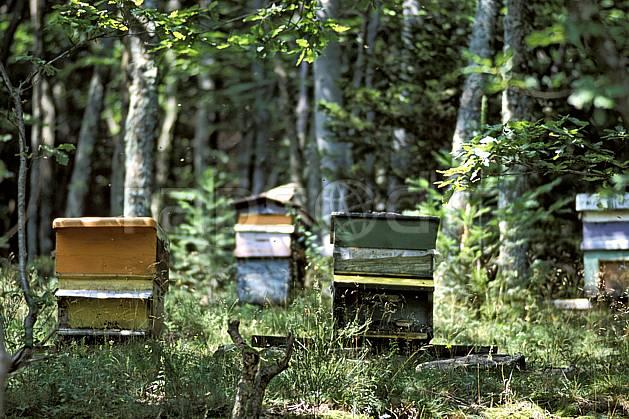 ae2893-13LE : Ruches en forêt, Savoie, Alpes.  Europe, CEE, abeille, ruche, C02, C01 arbre, environnement, faune, forêt, moyenne montagne (France).