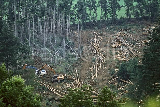 ae2893-15LE : Coupe de bois, Savoie, Alpes.  Europe, CEE, tronc, C02, C01 arbre, environnement, forêt, habitation, moyenne montagne (France).
