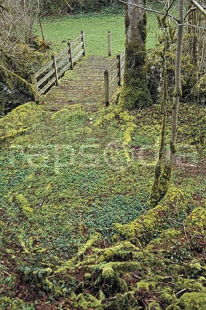 ae3128-35LE : Pont, La Gourgue d'Asque, Pyrénées.  Europe, EEC, footpath, road, leaf, moss, under wood, bridge tree, environment, forest, middle mountain (France).