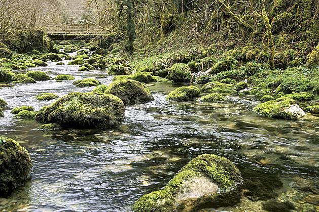ae3129-05LE : La Gourgue d'Asque, Pyrénées.  Europe, CEE, pont, mousse, sous bois, C02, C01 environnement, forêt, moyenne montagne, rivière (France).