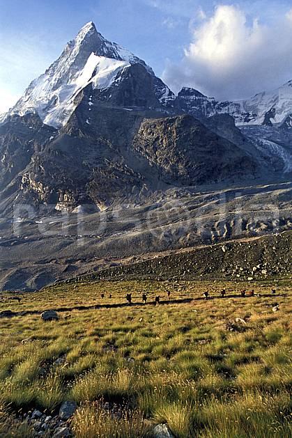 cg2529-27LE : Descente vers Zermatt, Le Cervin, Haute Route Chamonix / Zermatt, Alpes. randonnée pédestre Europe, sport, rando, loisir, action, sport de montagne, sentier, ciel nuageux, herbe, C02, C01 groupe, moyenne montagne, paysage, personnage (Suisse).