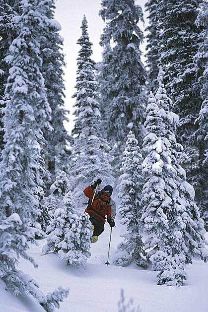 da2609-28LE : Ski-freeride, Fernie, Colombie Britannique. ski hors piste Amérique du nord, Amérique, sport, loisir, action, glisse, sport de montagne, sport d'hiver, ski, sport extrême, brouillard, gerbe, godille, sapin, virage, C02, C01 arbre, forêt, homme, personnage (Canada).