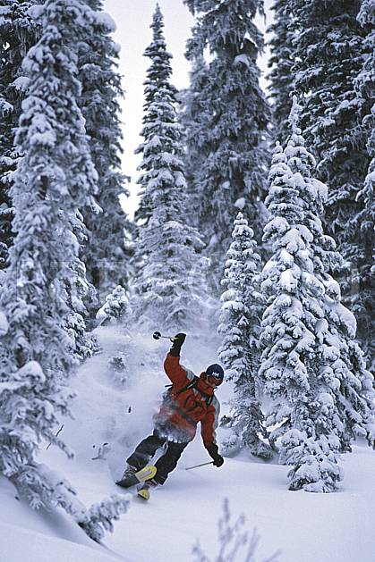 da2609-29LE : Ski-freeride, Fernie, Colombie Britannique. ski hors piste Amérique du nord, Amérique, sport, loisir, action, glisse, sport de montagne, sport d'hiver, ski, sport extrême, brouillard, gerbe, godille, sapin, virage, C02, C01 arbre, forêt, homme, personnage (Canada).