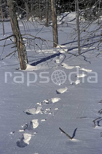 dg3096-08LE : Trace de pas dans la neige. randonnée pédestre Amérique du nord, Amérique, sport, rando, loisir, action, sport de montagne, trace, C02, C01 forêt (Canada Québec).