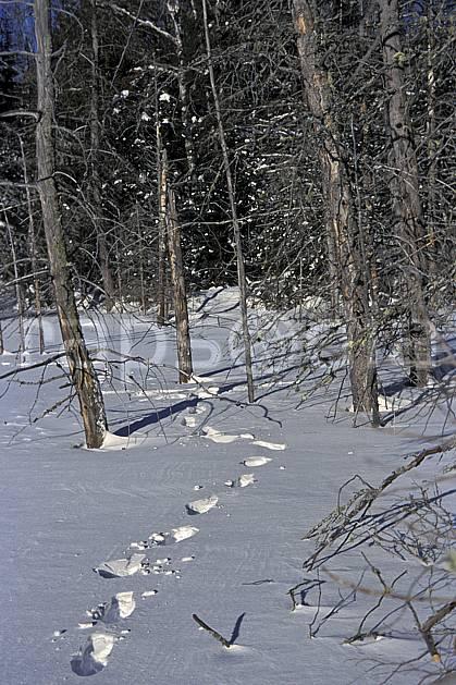 dg3096-09LE : Trace de pas dans la neige. randonnée pédestre Amérique du nord, Amérique, sport, rando, loisir, action, sport de montagne, trace, C02, C01 forêt (Canada Québec).