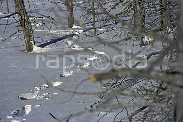 dg3096-10LE : Trace de pas dans la neige. randonnée pédestre Amérique du nord, Amérique, sport, rando, loisir, action, sport de montagne, trace, C02, C01 forêt (Canada Québec).