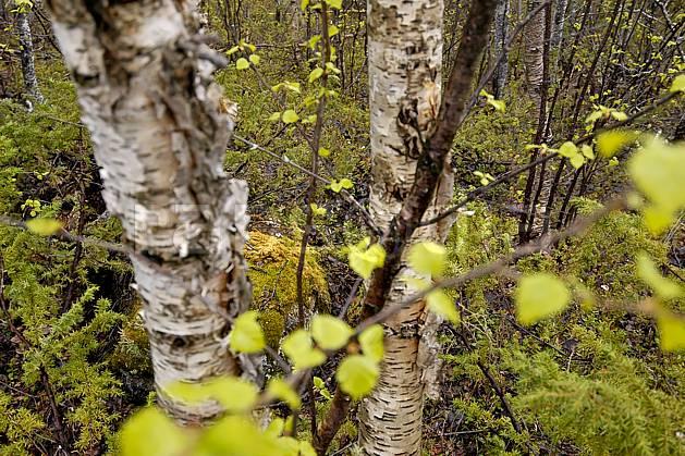 ea054400LE : Paysage.  Europe, CEE, mousse, C02, C01 arbre, forêt, moyenne montagne, paysage, voyage aventure (Norvège).