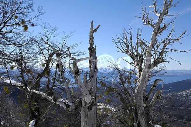 ea054831LE : Cerro Catedral, Bariloche, Patagonie.  Amérique du sud, Amérique Latine, Amérique, C02, C01 arbre, moyenne montagne, paysage, voyage aventure (Argentine).